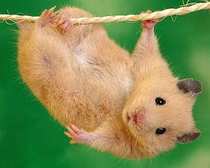 Chinese Zodiac Rat Year